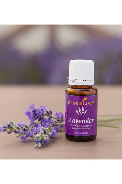 Hasil gambar untuk lavender essential oil young living