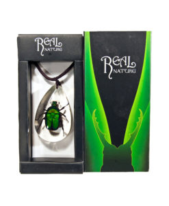 jew-pendant-resin-beetle-green-box